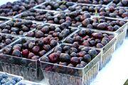 Michigan Cherries, 2009 July