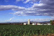 Corn production in Colorado