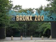 Stavenn Bronx Zoo 00