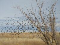 Govetreebirds
