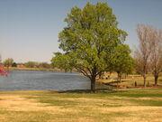 Amarillo pond IMG 0153