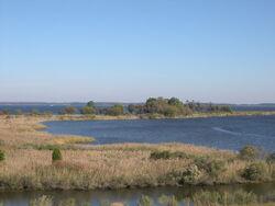 ChesapeakeTidalWetlands