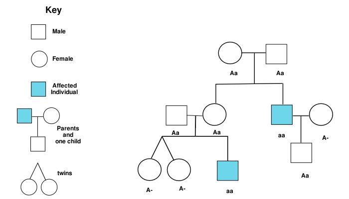 pedigree tree
