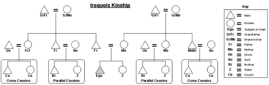 Create Kinship Diagram Diy Wiring Diagrams