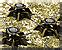 Minefield carpet icon