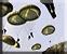 Airborne raid icon