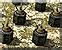 Minefield deployment icon