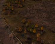 ForgottenForest1