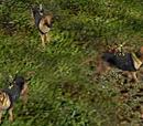 Attack Dog