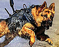 Attack dog icon