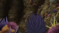 Scarlet Cobra Urchin profile