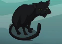 Black Cat profile