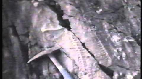 Stinchcomb-Ediacaran fossils