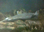 U85 Suibmarine