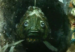 Teufel (undersea god)