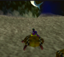 Turtle Taxis