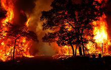 Forest-fire 04-PS