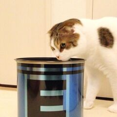 Sakurai's Cat sniffing what's sure to be an unsatisfactory dinner.