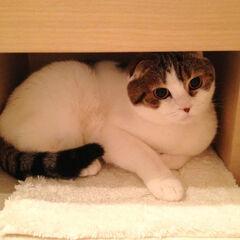 Sakurai's Cat in its hideout.
