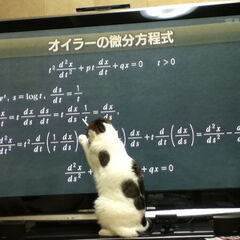 Sakurai's Cat teaching Sakurai Japanese.