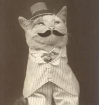 Tophatcat