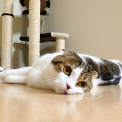 As you can see, Sakurai's Cat answers any and all phone calls. Sakurai is a prisoner to it.