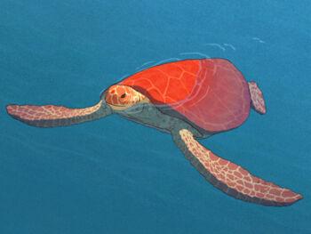 Rote Schildkröte