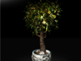 Ghostfruit Tree