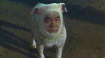Man-Faced Dog