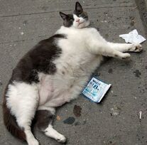 Fat-pets-7
