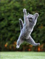Jumping-cats22 (1)