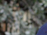 Lorelai and Luke