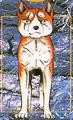 Yukimuragdwband31color