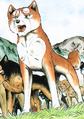 Yukimura GDW ed1 vol33 2