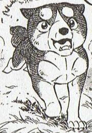 Joe puppy