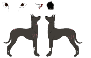 Xoloitzcuintli ref lines by nora and yagari-d58kme3