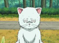 Gin cat