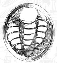Trilobadge