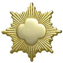 Gold-Award-pin