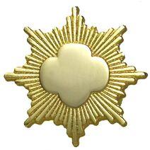 Gold-Award-pin-0