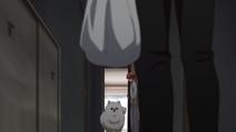 Kedama running over to Ritsuka