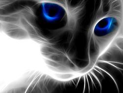 Black-cat-wallpaper-1-