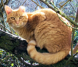 Tresire cat by kitsunekko-1-