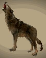 2024672-wolf