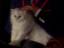 Mr puss