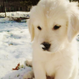 WinterPuppies6