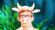 Artie-The Fox