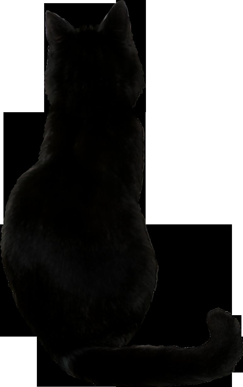 cat species name