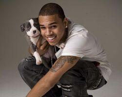 Chris brown puppy-1280x1024