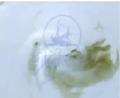 Vlcsnap-2015-05-10-13h27m37s1089